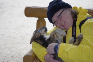 Sled Dog Camp in Alaska with sleeping puppy
