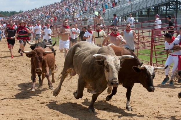 How is this good for people or the bulls?' photo from greatbullrun.com